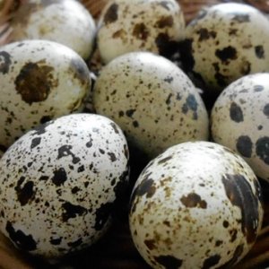 Яйцo перепелиное.