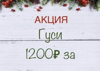 АКЦИЯ Гуси 1200 руб за тушку, с 5.01 по 7.01.