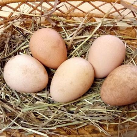 Яйцо цесарки.